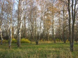 GuahooИзвестная финская погода в киржаче на 3 сайте нашего магазина